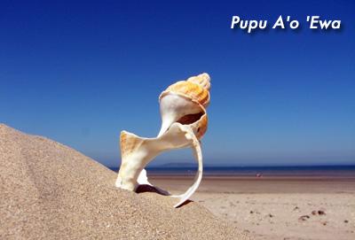 Pupu A O `Ewa